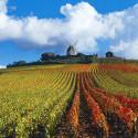 Champagne 2014 – Bene la Vendemmia