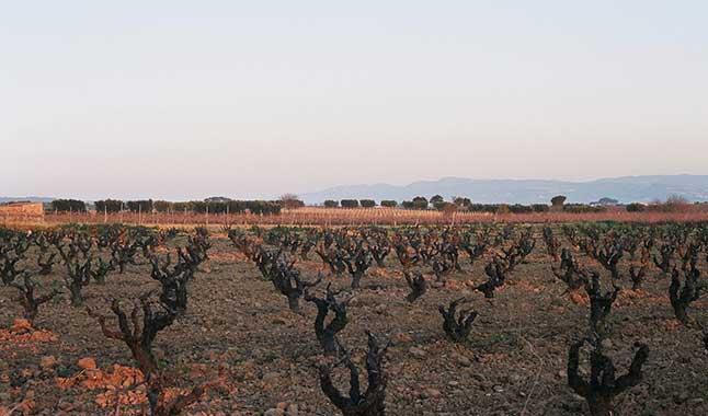 Video: Il clima che cambia la geografia del vino